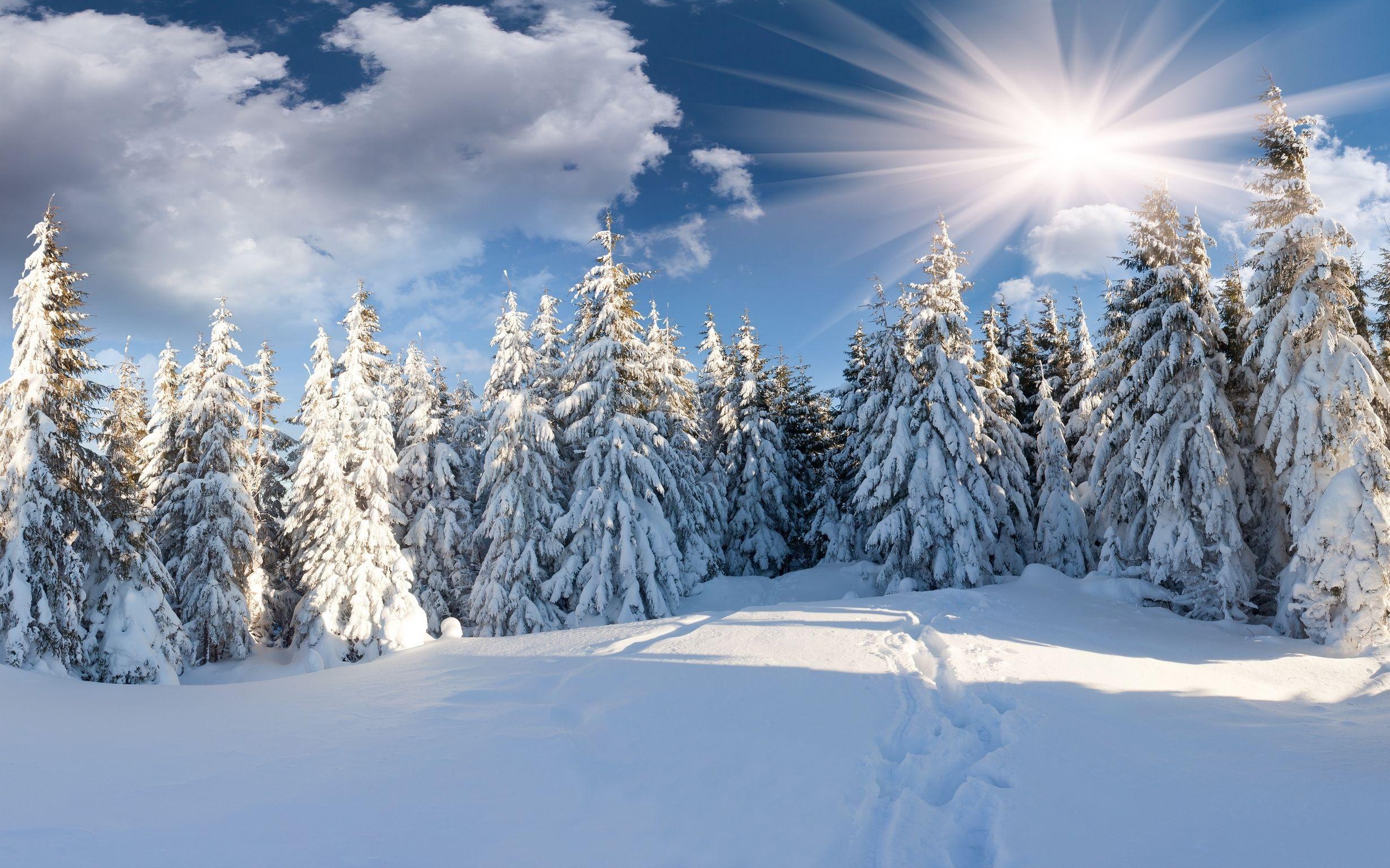 пропитывают зимний пейзаж открытки высокого разрешения можете