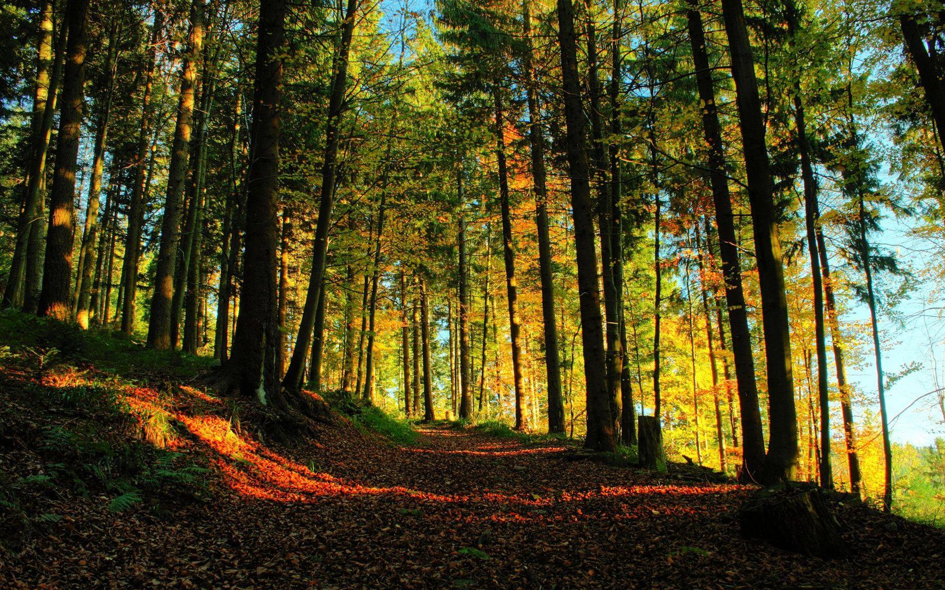 Большая картинка лес