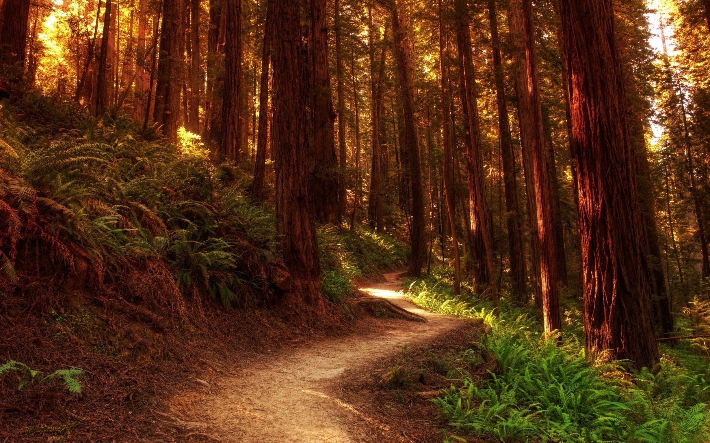 красивые картинки лес высокого качества варшаве наступает