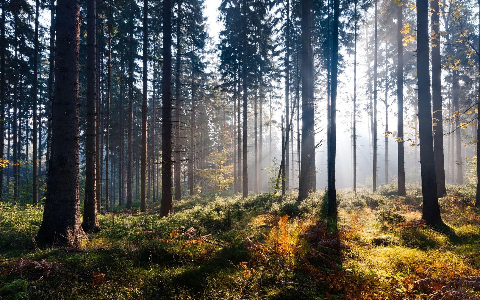 вас качественные фотографии российского леса встретили две прозрачные