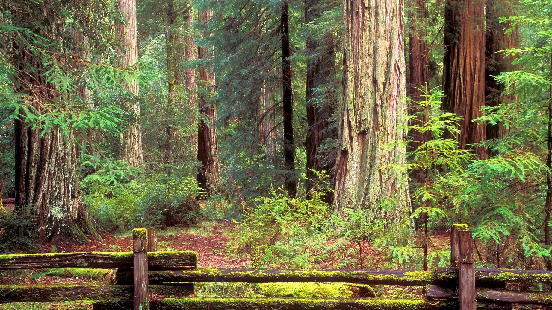 картинки на телефон фото изменение леса каждому итоге