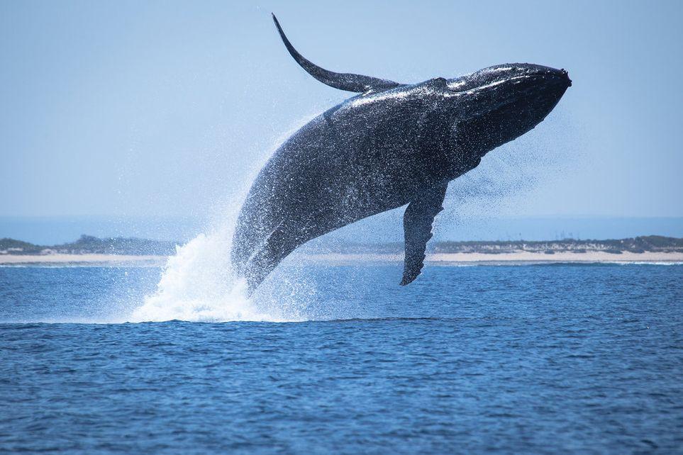 фоторедактор выпрыгивает кит в картинке лобовом столкновении